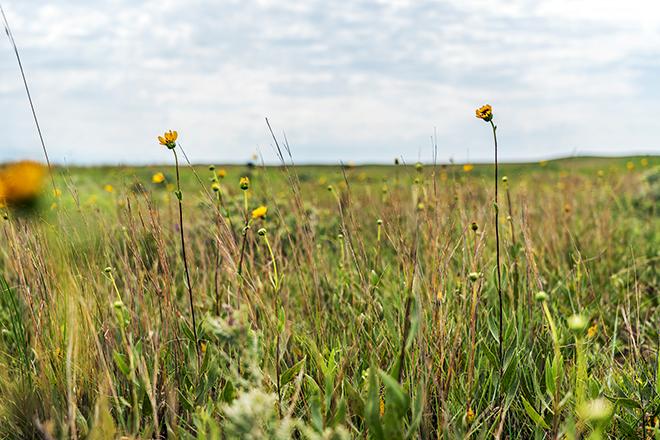 grasslands3resize.jpg