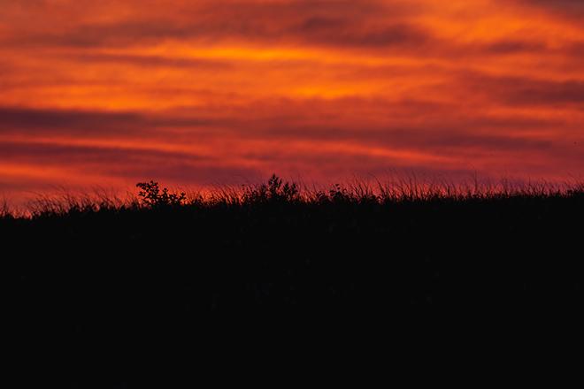 grasslands6resize.jpg