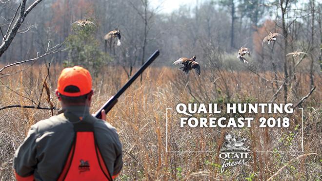 Texas Quail Hunting Forecast 2018