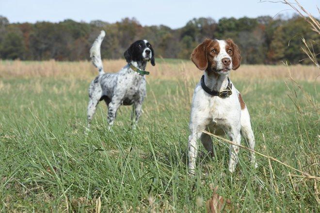 Hunting Dog Training Videos Youtube
