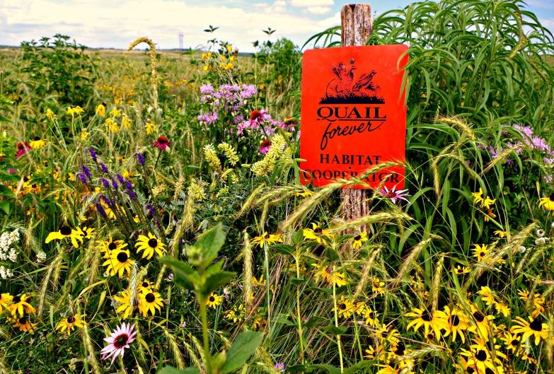 The end result of a pollinator-friendly quail habitat project.