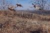 Rooster Ridge POY 09-10 Reg Ed.-Storm